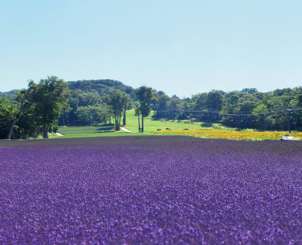 tambara-lavenderpark